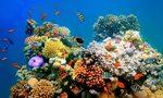 Sea Life London Aquarium : les récifs de corail