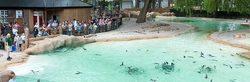 Photos Zoo de Londres