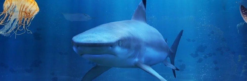 Photos Aquarium de Londres
