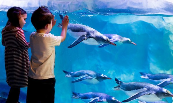 Sea Life London Aquarium : des enfants devant le bassin aux pinguins