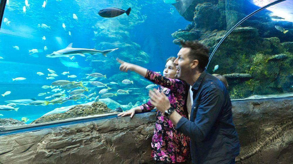 Sea Life London Aquarium : un papa et sa fille dans le tunnel sous-marin