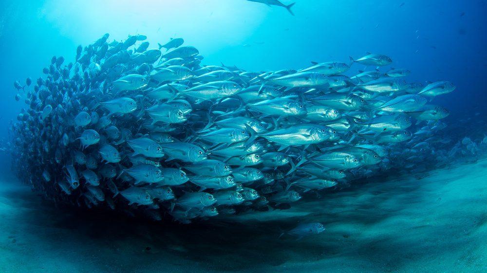 Sea Life London Aquarium : un magnifique banc de poissons
