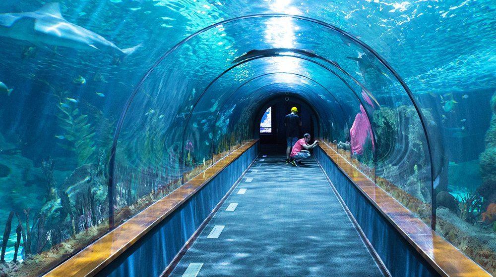 Sea Life London Aquarium : un immense tunnel sous-marin