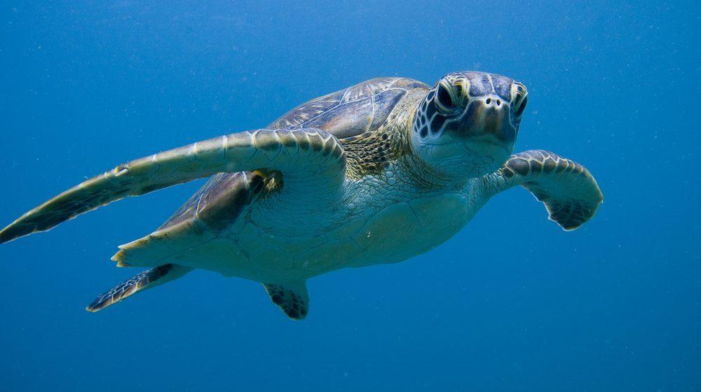 Sea Life London Aquarium : une tortue marine