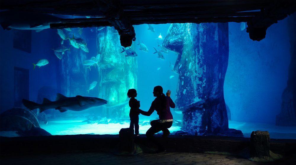 Sea Life London Aquarium : une maman et son fils devant le bassin aux requins